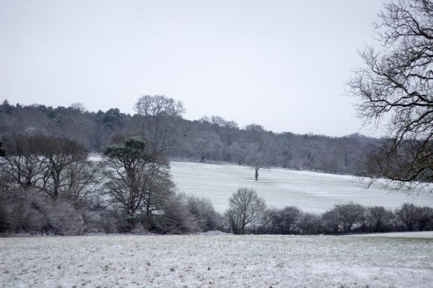 A Snowy Trent Park