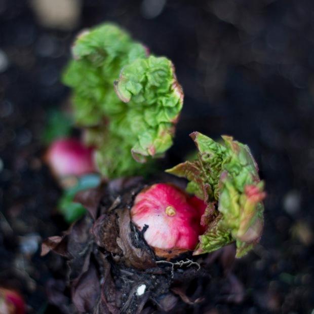 In the garden - Spring