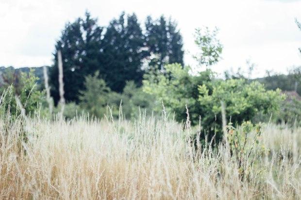 A meadow - BakingBetsy.com