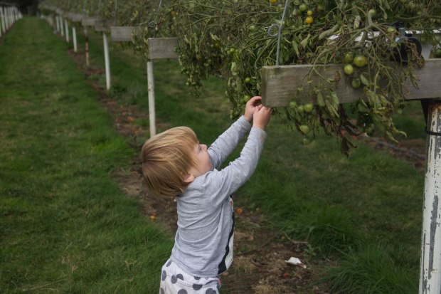 A Pick Your Own Farm in the Autumn | BakingBetsy