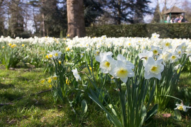 Spring time at Capel Manor Gardens in north London