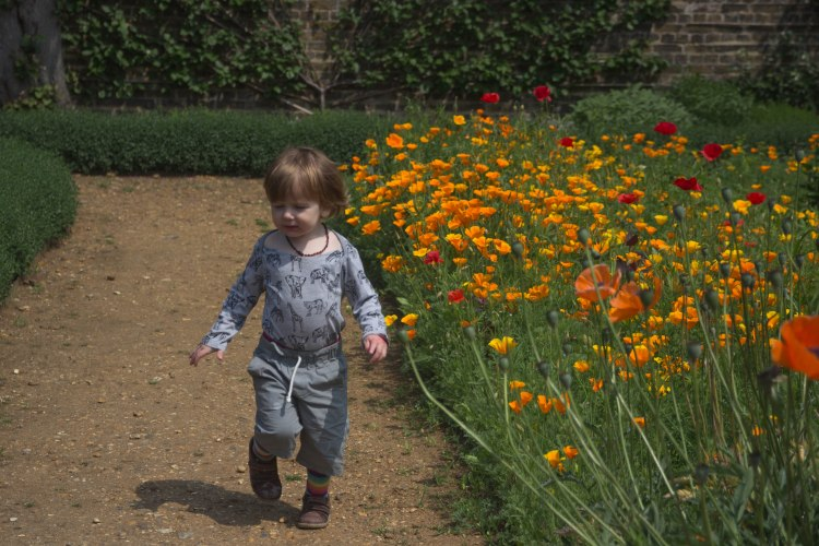 Early summer at Myddleton House Gardens. Beautiful blooms in Enfield.